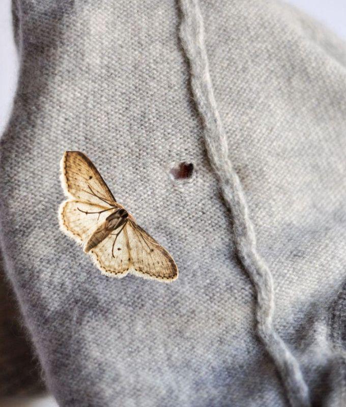 lutter contre mites tricot