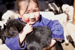Chèvre cachemire et enfant